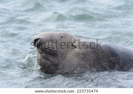 Seal in the water - stock photo