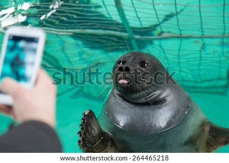 Seal is playing - stock photo