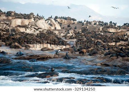 Seal Island, located in False Bay near SImon's Town, South Africa, is a favorite hunting ground for great white sharks. - stock photo