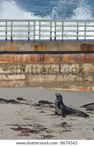 Seal on beach with seawall