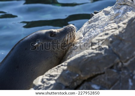 Seal on rocks with sunset, Florida