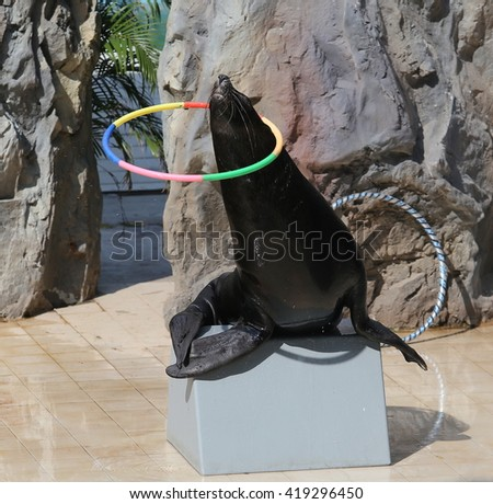 seal playing hula hoop - stock photo