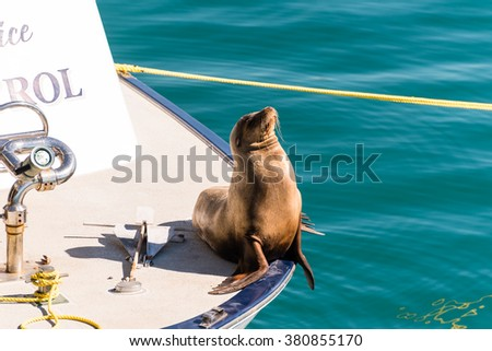 seal relaxing in the sun on a patrol boat - stock photo
