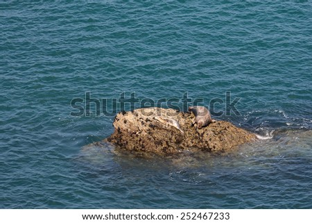 seal with pup on rocks