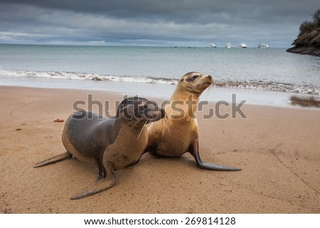 Sealion - stock photo