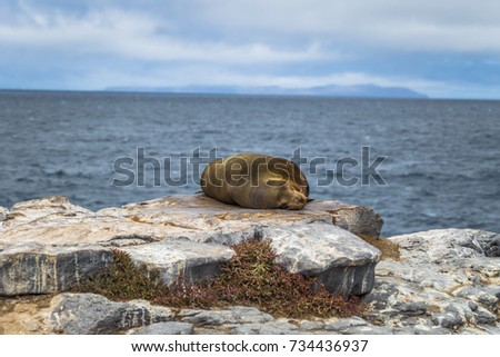 Sealion sleeping in Plaza Sur island, Galapagos Islands, Ecuador