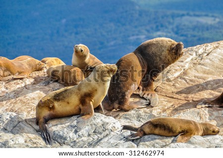 Seals and sea lions, Beagle Channel, Ushuaia, Argentina - stock photo