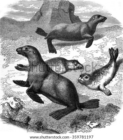 Seals and sea lions zoological garden of acclimatization, the Bois de Boulogne, vintage engraved illustration. Magasin Pittoresque 1876.