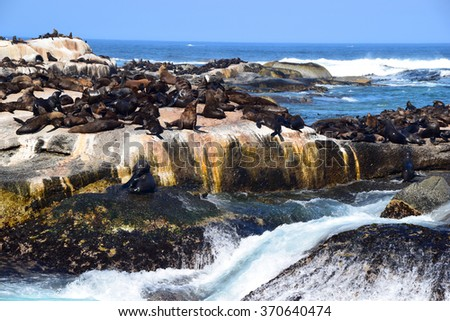 Seals in South Africa - stock photo