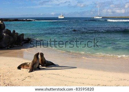 Seals on a beach on the island of Espanola in Galapagos - stock photo