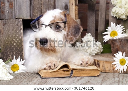 Sealyham Terrier and book - stock photo