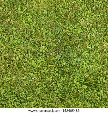Seamless green grass and clovers texture