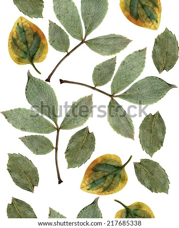 Seamless leaves, isolated on white, background for continuous replicate - stock photo