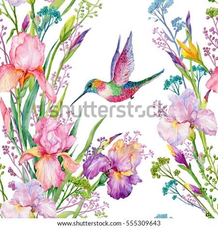 Seamless Pattern Irises Flowers And Small Hummingbirdexotic Print Fabric Wallpaperwatercolor