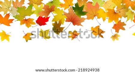 Seamless pattern of autumn leaves, falling down on white.