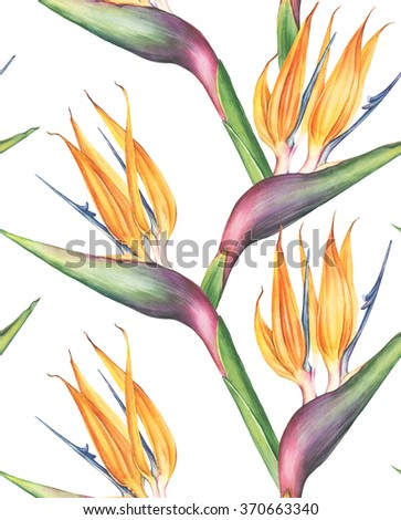 Seamless pattern of watercolor exotic and tropical strelitzia (bird of paradise) flower. Botanical illustration. - stock photo
