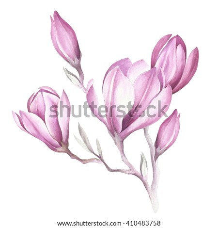 Seamless pattern with blooming magnolia twig. Watercolor illustration - stock photo