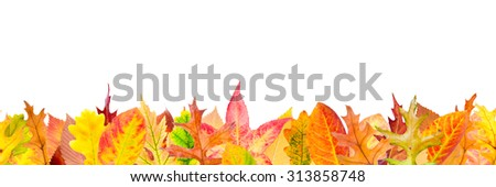 Seamless pattern with fallen autumn leaves - stock photo
