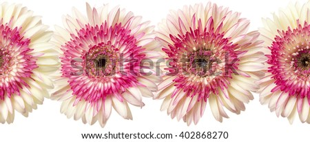 seamless repeatable photographic floral border of white and magenta gerbera - stock photo