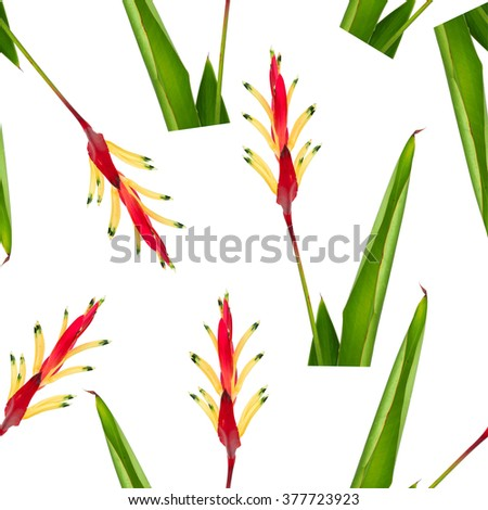 Seamless texture of red and yellow Heliconia flower
