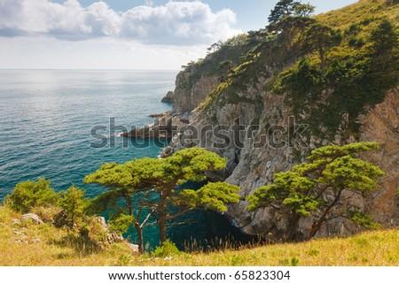 seascape, cedar on a rocky island - stock photo
