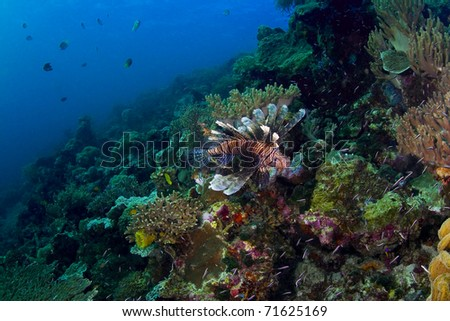 Seascape of a busy coral reef with a prominent lionfish (Scorpaenidae). Taken in the Wakatobi, Indonesia.
