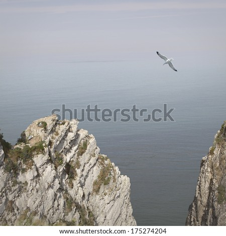 Seascape with flying seagull over Etretat cliffs. Normandy, France. Sea landscape art photography with rocks