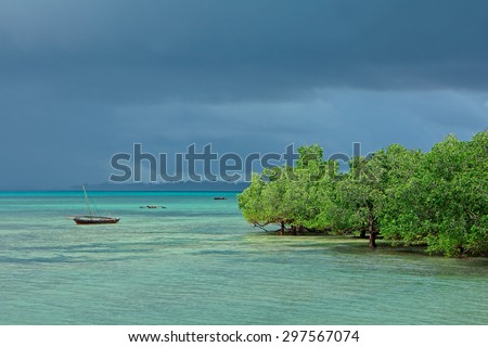 Seascape with mangrove trees and dhows on the tropical coast of Zanzibar island