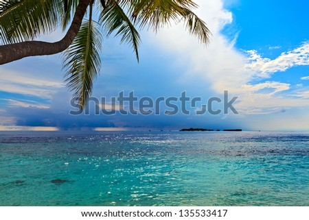 Seascape with palm tree, Maldives, The Indian Ocean