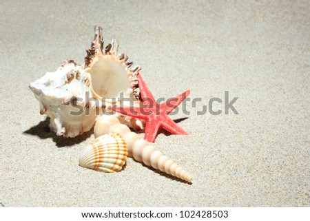 seashell and starfish in white sand beach as summer vacation background