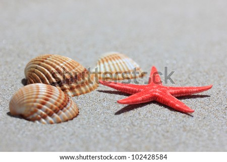 seashell and starfish in white sand beach as summer vacation background - stock photo