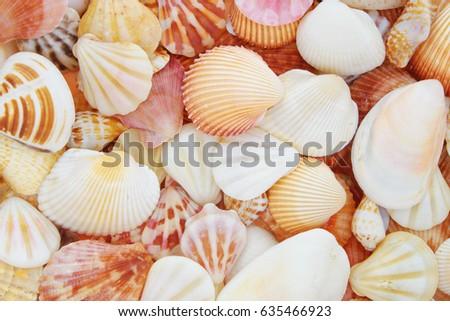 stock-photo-seashell-background-63546692