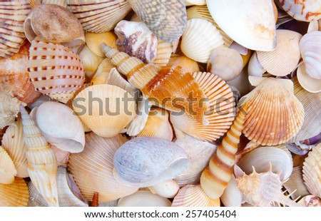 Seashell background, lots of different seashells piled together - stock photo
