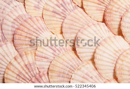 stock-photo-seashell-background-lots-of-