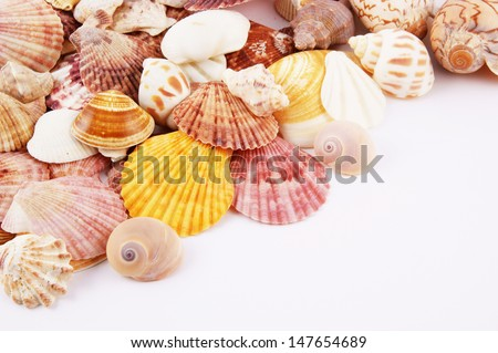 stock-photo-seashell-background-with-roo