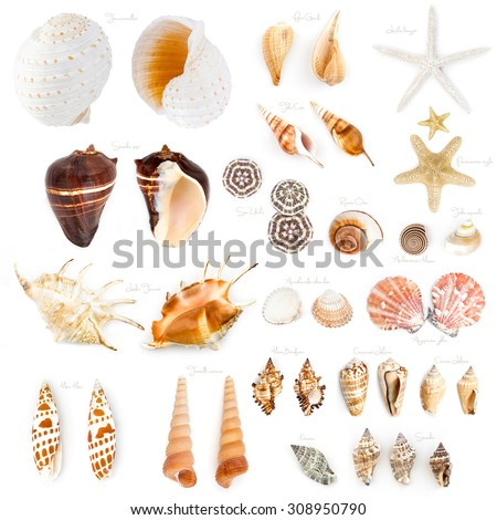 Seashell collection isolated on the white background. - stock photo