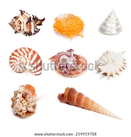 Seashell collection isolated on the white background. Set 1. - stock photo