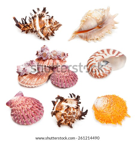 Seashell collection isolated on the white background. Set 2. - stock photo