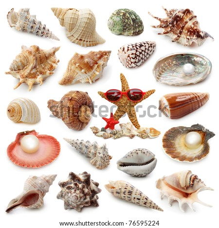 Seashell collection isolated on white background - stock photo