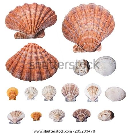 Seashell collection isolated on white background. Original size - stock photo