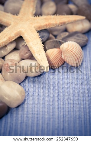 Seashell collection on blue background - stock photo