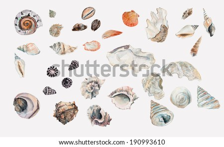 Seashell collection on sand background. Water color illustration. Set - stock photo