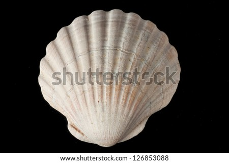Seashell from tropical beach