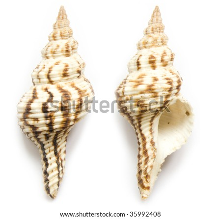 seashell front end back on the white isolated background