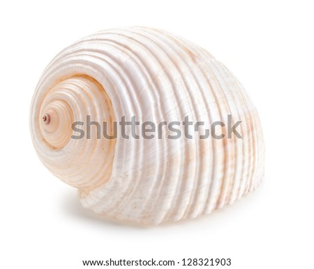 Seashell in close-up isolated on a white background