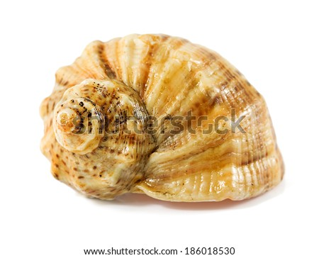 seashell isolated on a white background