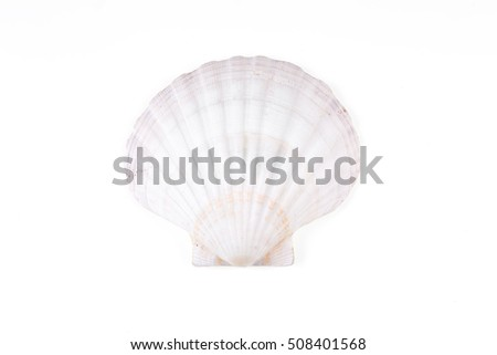 seashell isolated on a white background closeup