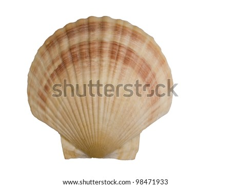 seashell isolated over a white background with a clipping path at original size