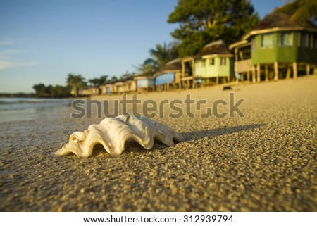seashell of the giant clam on the beach with fale bungalow - stock photo