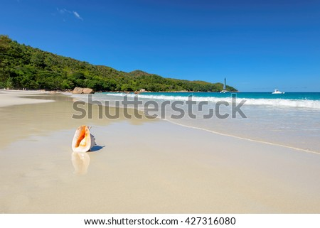 Seashell on Anse Lazio beach at Praslin island, Seychelles - stock photo